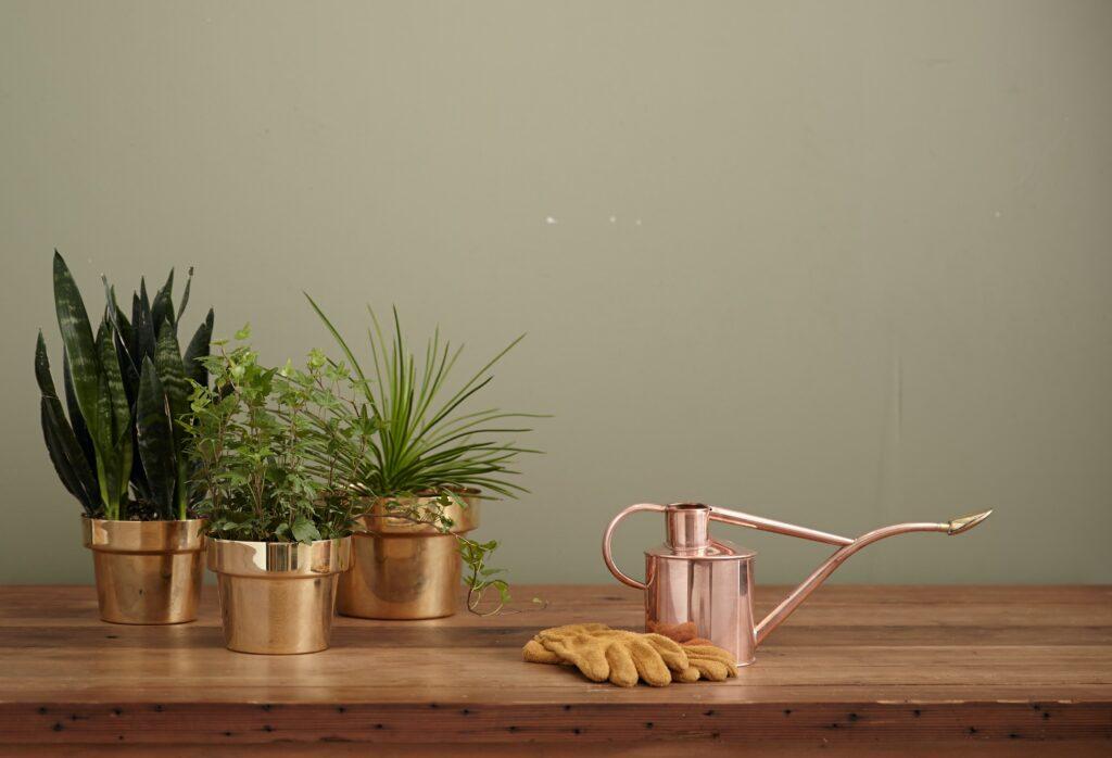 観葉植物とジョウロと軍手