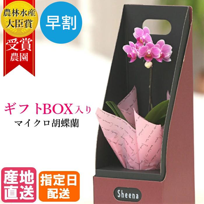 マイクロ 胡蝶蘭 1本立 2.5号 ピンク